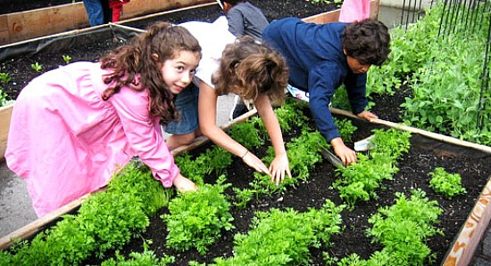 NYC-School-Gardens-Program-1